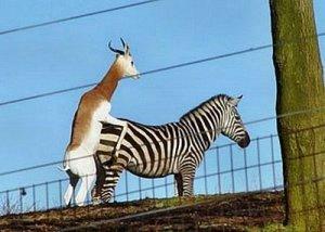 https://absoluterevo.files.wordpress.com/2012/08/funny_animal_sex_1.jpg?w=300