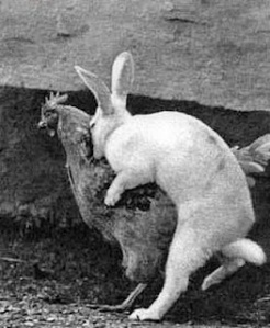 https://absoluterevo.files.wordpress.com/2012/08/funny_animal_sex_9.jpg?w=246
